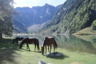 Cavalli al lago di Cama