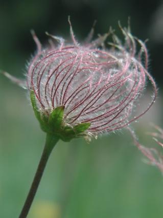 Efflorescenza